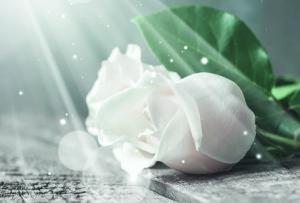 lahjakortti-ruusu-001