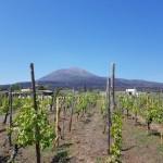 Viinitarha Vesuviuksen maisemissa