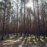 Lahemaan kansallispuiston metsämaisema
