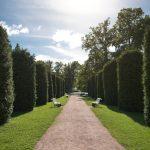 Sagadin kartanon puisto kesällä