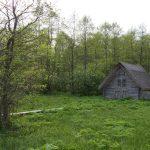 Puumökki Matsalun kansallispuistossa
