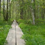 Pitkospuut Matsalun kansallispuistossa