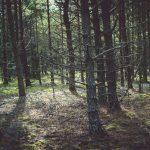 Metsää Matsalun kansallispuistossa