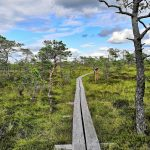Lahemaan kansallispuisto pitkospuut