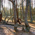 Kuurinkynnäs puita
