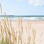 Rantaheiniä hiekkarannalla, taustalla meri.