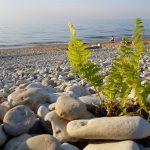 Kiviä Toilan rannalla