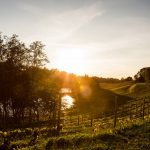 Murimäen viiniviljelykset