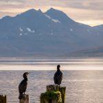 Lintuja istumassa meren äärellä puupölkkyjen päällä
