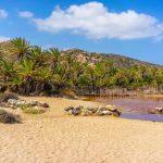 Vai palmtrees-lahti ja ranta Kreetan saarella Kreikassa