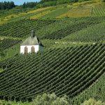 Mosel joen viiniviljelmiä
