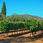 Näkymä kreetalaiselta viinitilalta