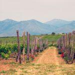 Näkymä viinitilalta Kreetalla