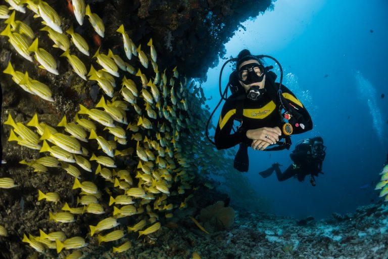 Merenalainen elämä tulee sukeltajille tutuksi.