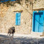 Lammas katsoo kameraan rakennuksen edessä, rakennuksessa turkoosi ovi ja ikkunalaudat.