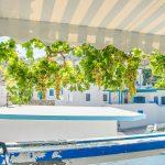 Markiisin alta näkyy paljon viinirypäleitä köynnöksessä, taustalla sinivalkoisia rakennuksia.
