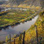 Myöhäissyksyn viiniviljelmiä Moselilla