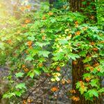 Lukuisia perhosia lepattaa vehreän puunoksan ympärillä.