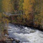 Pieni karhunkierros Kuusamossa
