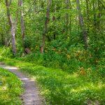 Polko vehreässä metsässä.