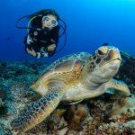Merikilpikonna lähikuvassa korallista meren pohjaa vasten, taustalla nuori nainen sukellusvarusteissa katsoo kameraan.