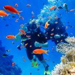 Kaksi ihmistä sukellusvarusteissa veden alla korallien keskellä, edustalla paljon oransseja kaloja.