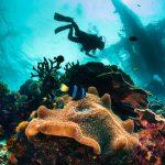 Meren pohjasta otettu kuva pintaa kohti. Kuvassa kolme sukeltajaa, koralleja sekä pieniä kaloja.