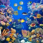 Värikkäitä kaloja ja koralleja.