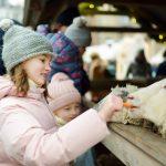 Lapset syöttävät aitauksessa olevia lampaita.