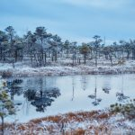 Talvinen soinen metsä ja lampi sinisessä valossa.