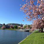Bergen Lille Lungegardsvann