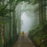 nainen ja koira polulla keskellä metsää Fløyenilla Bergenissä