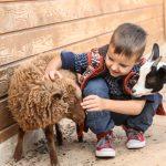 Pieni poika silittää lammasta, vieressä myös kili.