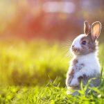 Pieni sinisilmäinen pupu istuu etukäpälät ilmassa ruohikossa.