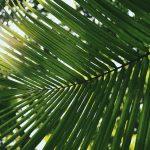 Aurinko paistaa vihreiden lehtien välistä