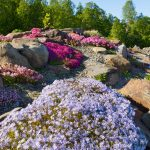 Tromssan kasvitieteellinen puutarha