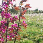 Retliinejä kukkasia pensaassa