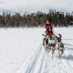 Huskyajelu Saariselällä