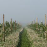 Polku vihreiden viljelmien keskellä