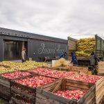 Punaisia omeioita laatikossa hallin edustalla