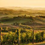 Viiniviljelmiä Toscanan maaseudulla.