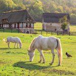 Hevosia ja kanoja aitauksessa Normandialaisella maatilalla.