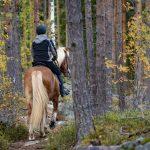 Nainen ratsastaa metsässä.