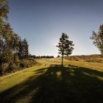 Puu golfvaylällä