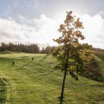Puu keskellä golfväylää