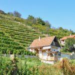 Viiniviljelmiä ja taloja Tokajin rinteillä, Unkarissa