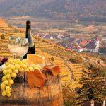 Valkoviinä, juustoja ja rypäleita viinilaaksossa. Wachau, Itävalta