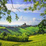 Vihreä viinilaakso ja sininen taivas, Piemonte Italia