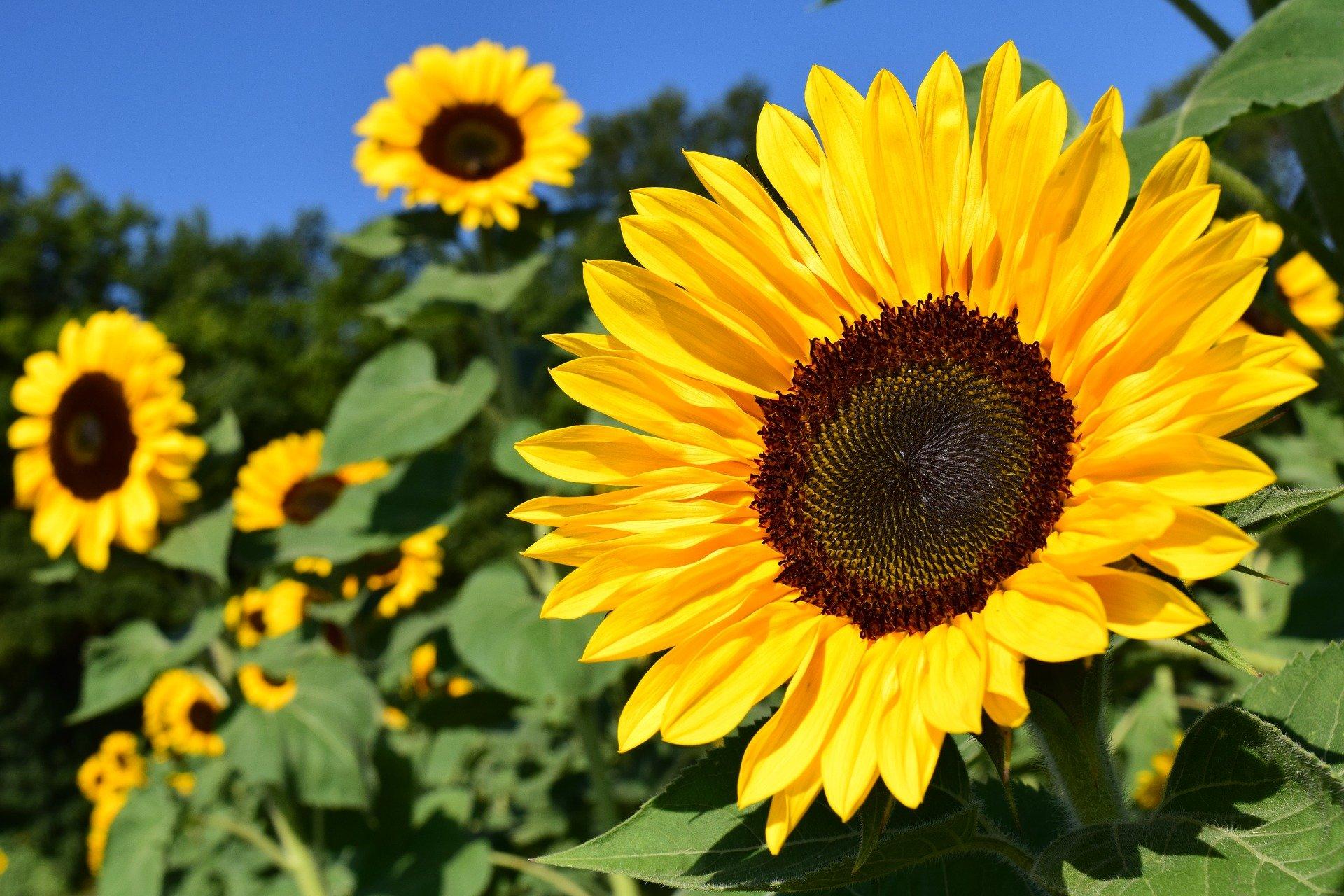 Väriloistoa Türin kukkamarkkinoilla