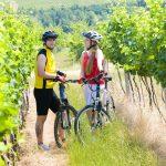Pyöräilijät viiniviljelmän keskellä.